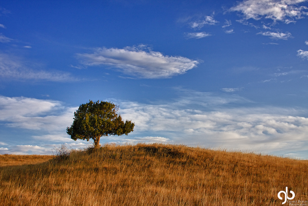 I found this lone tree east of Big Timber, Montana while on a photo safari.