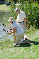 Senior couple feeding ducks