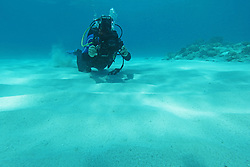 Naturalist and film-maker Richard Costin filming underwater at the Rowley Shoals.