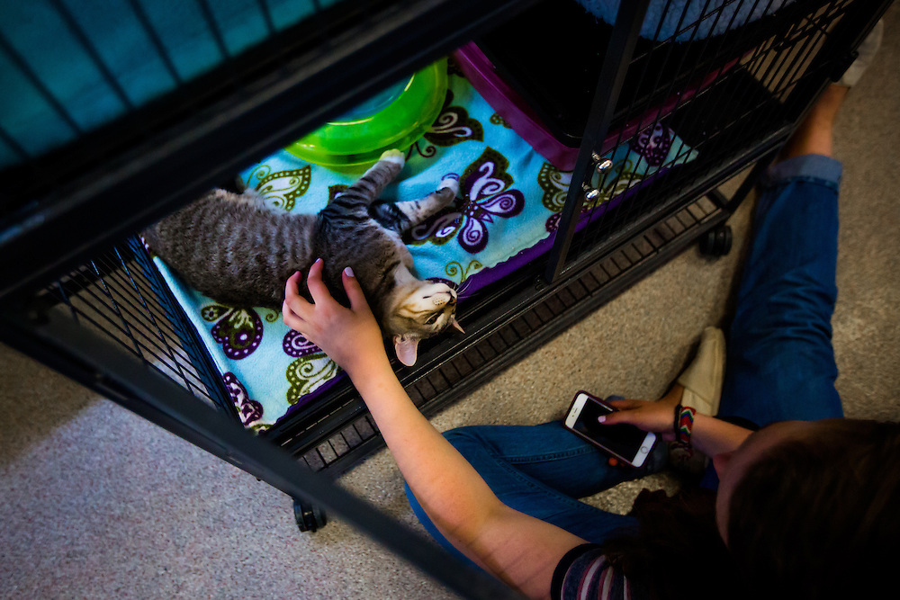 SARASOTA, FL -- August 19, 2016 -- Students at New College of Florida volunteer at the Cat Depot rescue center in Sarasota during orientation week for the start of the 2016-17 academic year. (PHOTO / New College of Florida, Chip Litherland)