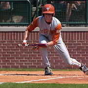 UT Baseball Player Bunting