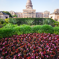 Austin Texas State Capitol Building flowers. The Texas State Capitol was built in 1888 and is a historic landmark. Austin TX is a major city in the Southwestern United States of America.