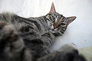 Straßen- und Hauskatze Speedy auf einem Kissen im Garten.<br /> <br /> Street- and housecat Speedy on a pillow in the garden.