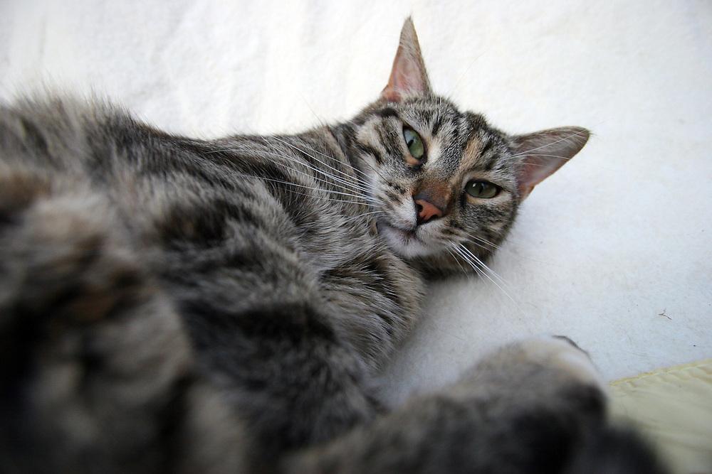 Stra&szlig;en- und Hauskatze Speedy auf einem Kissen im Garten.<br /> <br /> Street- and housecat Speedy on a pillow in the garden.