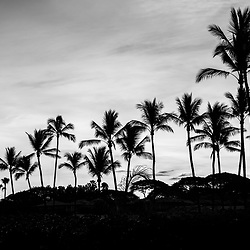 Maui Hawaii Wailea Makena palm trees sunrise black and white photo. Copyright ⓒ 2019 Paul Velgos with All Rights Reserved.