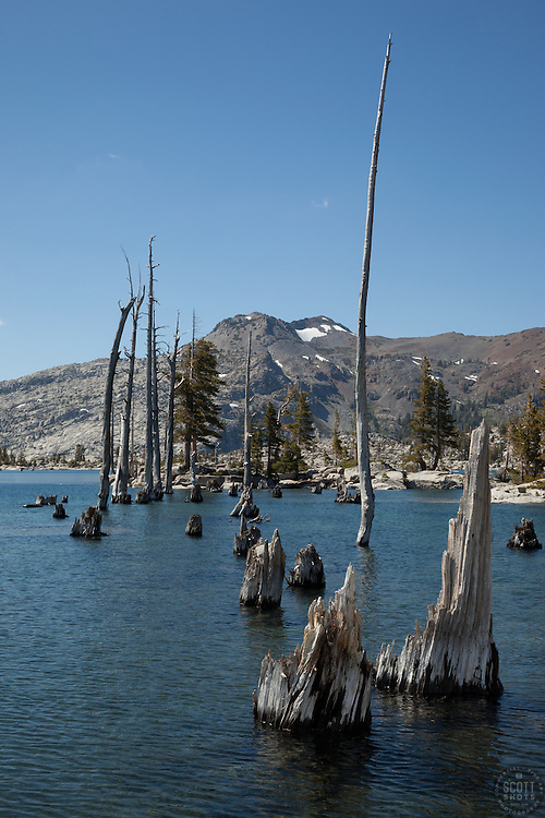 """Lake Aloha 10"" - Photograph of dead trees and stumps at Lake Aloha in the Tahoe Desolation Wilderness."
