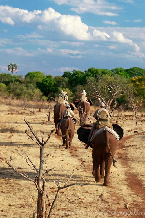 Africa, Zimbabwe, Victoria Falls. African Elephant-back safari with Wild Horizons.