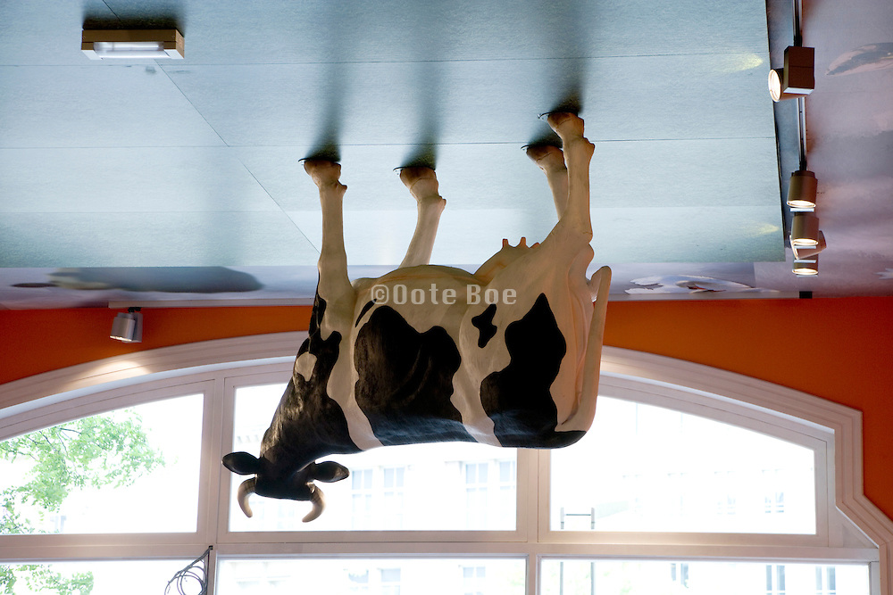 cow placed on the ceiling in a souvenir shop in Amsterdam