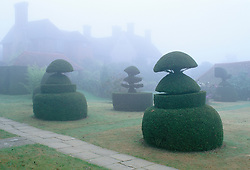 The topiary lawn at Great Dixter on a misty autumn morning. Taxus baccata
