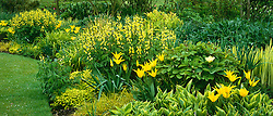 A yellow themed border at Glen Chantry. Planting includes Tulip 'West Point', Thermopsis lanceolata, Hosta 'Spinners', Iris pseudacorus 'Variegata' and Paeonia mlokosewitschii