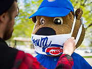 "06 MAY 2020 - DES MOINES, IOWA: ""CUBBIE,"" the mascot for the Iowa Cubs, wears a face mask while he waves to passing motorists during a hand sanitizer give away at Principal Park, the stadium for the Iowa Cubs, the minor league baseball team affiliated with the Chicago Cubs. Two months after the start of the COVID-19 pandemic Iowa retailers still can't keep everyday items like hand sanitizer, toilet paper, and alcohol based cleaning supplies in stock. Many of the artisan distilleries in Iowa have started making and distributing free hand sanitizer.      PHOTO BY JACK KURTZ"