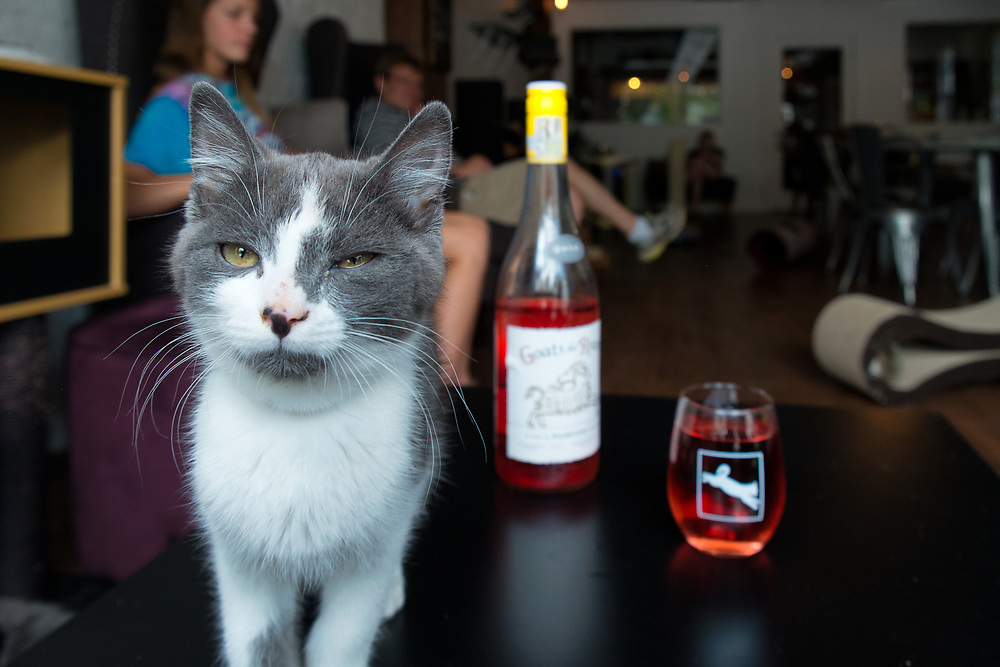 Pounce Cat Cafe & Wine Bar