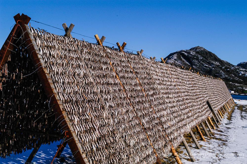 Norway, Stokksund. Traditional drying of fish on fish-racks.
