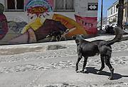 Street dogs in Cerro Alegre, Valparaiso.