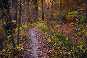 The Mill Race Trail in Oella, fall.