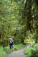 Mini Trail. Hoh River Rain Forest. Olympic National Park, WA