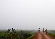 Rwanda, février 2004. Des femmes reviennent du marché le long d'une plantation de thé où des ouvrières travaillent.