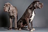 El Jethro & Ibanez