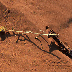 Canyonlands National Park, UT..Sage and tracks (insect?) in desert sand. Island in the Sky district.