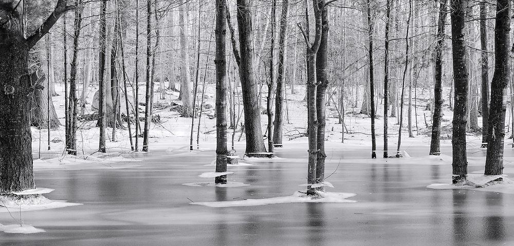Ice plates hanging on to the trunks of trees after the water dropped and refroze. Near Watertown, New York.