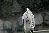 Bird in water spray