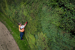© Licensed to London News Pictures. 07/08/2017. Cirencester, UK. Forester Jason Buckton trims the world's tallest yew hedge on The Bathurst Estate.  The 40 foot tall 150 yard wide hedge is trimmed every august over a two week period. Six inches of growth are cut making a ton of clippings. The clippings have been used in past years in the making of a cancer drug.   Photo credit: Peter Macdiarmid/LNP