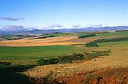 Sidlaw Hills, near Gallow Hill, Strathmore, Angus, Scotland