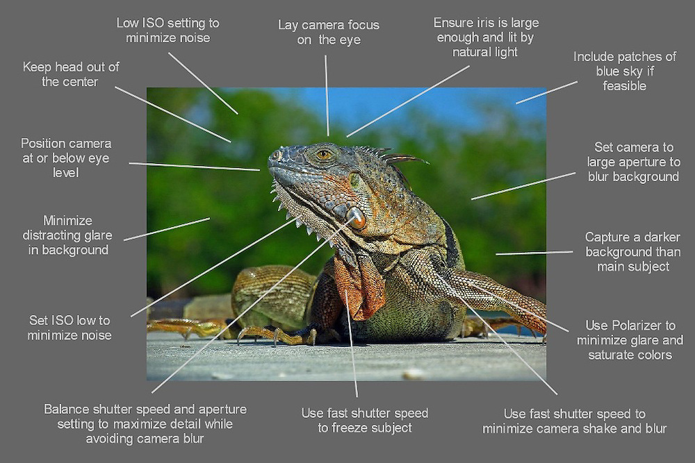 How to take better wildlife photography images - a free photo tip cheat sheet ready for download.