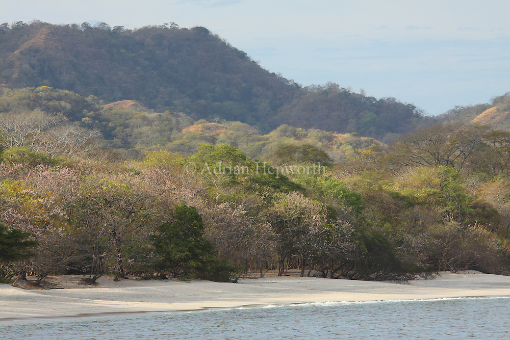 Tropical Dry Forest at Conchal Beach, Guanacaste, Costa Rica.  <br />