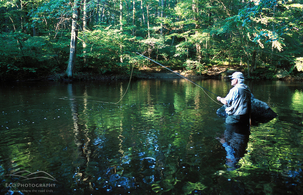 Flyfishing on the Mianus River at the Treetops Estate.  Purchased by the TPL for the Greenwich Land Trust and the State of CT in 2001.  Greenwich, CT