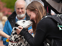 Pre-finals Therapy Dog visit to PLU on Thursday, May 19, 2016. (Photo: John Froschauer/PLU)