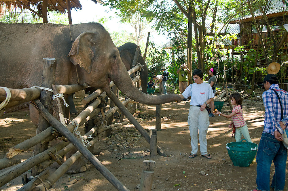 "Just before noon, excited volunteers carry huge baskets of food from the ""Elephant Kitchen"" for feeding time, a favorite time among guests. Yvonne Menn (center) brought her 6-year old daughter Sari (right) from Switzerland to work for a week at the park.  While hand-feeding an elephant with Sari she remarks, ""It is not like work all-day.  Volunteering is fun too!""    ..Sangduen ""Lek"" Chailert founded the park as a sanctuary and rescue centre for elephants.  The park currently has 32 elephants sponsored and supported by volunteers from all over the world."