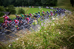 Flowers during Stage 4 of 23rd Tour of Slovenia 2016 / Tour de Slovenie from Rogaska Slatina to Novo mesto (165,5 km) cycling race on June 19, 2016 in Slovenia. Photo by Vid Ponikvar / Sportida