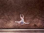 The Nutcracker <br /> choreography by Sir Peter Wright <br /> at the <br /> Birmingham Royal Ballet <br /> Birmingham Hippodrome, Great Britain <br /> 24th November 2017 <br /> <br /> Alys Shee <br /> The Snow Fairy <br /> <br /> Photograph by Elliott Franks <br /> Image licensed to Elliott Franks Photography Services