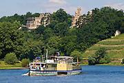 Elbe und Schloss Eckberg und Lingnerschloss, Weinberg, Dampfer, Dresden, Sachsen, Deutschland.|.river Elbe, castle Eckberg and Lingner castle, steamer, Dresden, Germany