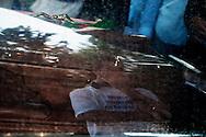 Acciaroli, Italia - 10 settembre 2010. Un momento dei funerali del sindaco di Pollica Angelo Vassallo ucciso in un agguato il sei settembre 2010..Ph. Roberto Salomone Ag. Controluce.ITALY A moment of the funera lof the major of Pollica Angelo Vassallo on September 10, 2010. the major was shot to death on September 6, 2010.