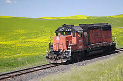 The Palouse River Rail Road company engine travels through the lush hills and yellow canola fields in the Palouse area, Washington.