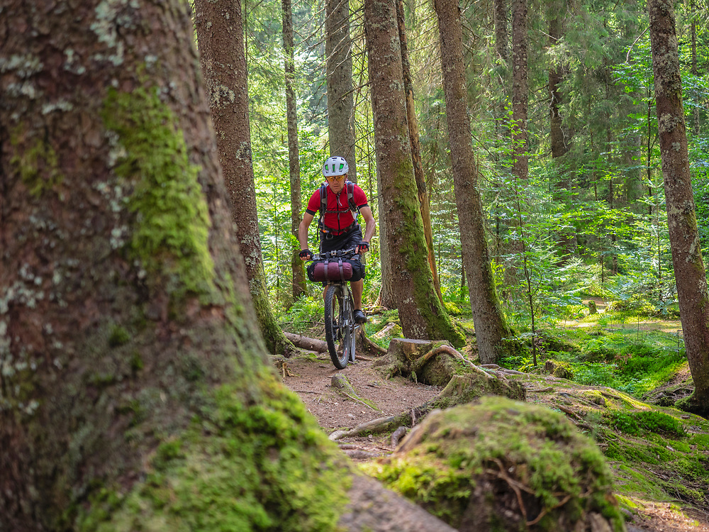 Mountain biker cycling through woods of Black Forest, near Aha, Baden-Wuerttemberg, Germany