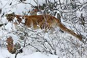 Wildlife and Nature