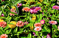 Selection of colorful annual plants in a flower bed.