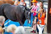 Wallace N.O.P.<br /> FEI World Equestrian Games Tryon 2018<br /> © DigiShots