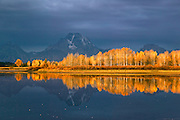 Yellow aspen and Mt Moran, Grand Teton National Park, Wyoming