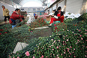 Dounan Flower Market on the outskirts of Kunming is the largest flower market in China. The local flower-growing business started in the 1980s, and now supplies more than half of China's cut flowers.