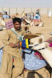 camel racing club at Al Marmoum outside Dubai  in United Arab Emirates