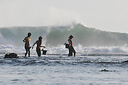 Children foraging the reef at low tide.