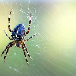 Spider on it's web.Photographe: Marc Lapointe, Sainte-Thérèse, Blainville, Québec