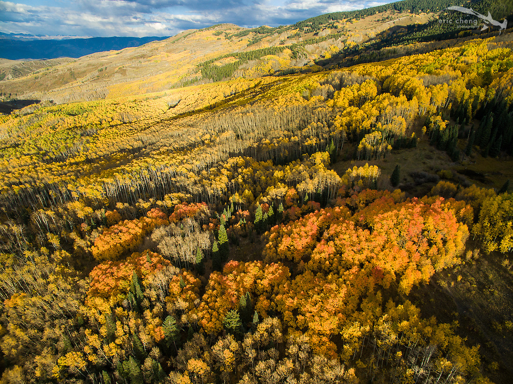 Low-altitude aerial view of fall aspen trees in Aspen, Colorado.