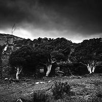Deserted overgrown farmhouse under grey skies