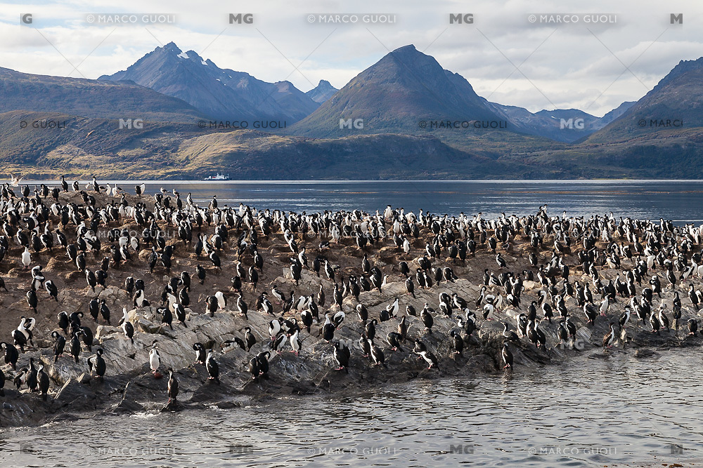 ISLOTE CON CORMORANES EN EL CANAL BEAGLE, USHUAIA, PROVINCIA DE TIERRA DEL FUEGO, ARGENTINA (PHOTO BY © MARCO GUOLI - ALL RIGHTS RESERVED. CONTACT THE AUTHOR FOR ANY KIND OF IMAGE REPRODUCTION)
