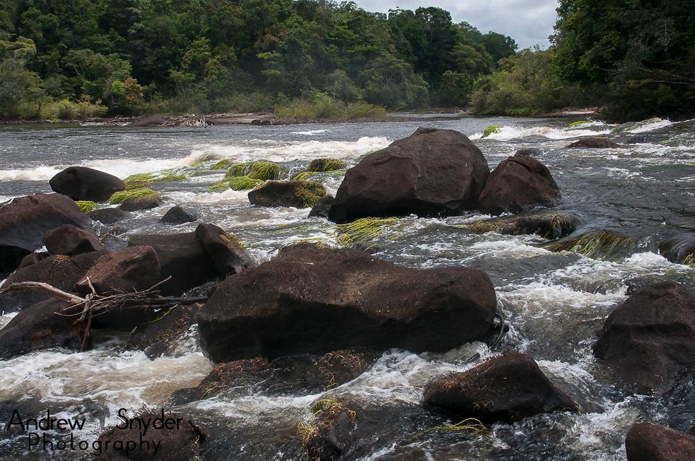 World Wildlife Fund/Global Wildlife Conservation Biodiversity Assessment Team 2-Potaro Plateau